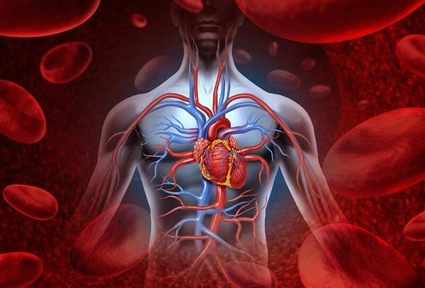 چگونه سیستم گردش خون خود را بهبود ببخشیم؟   پایگاه خبری جماران ...