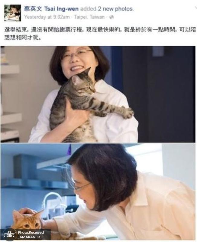 تسای گربه