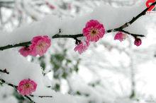 سرمای هوا در مهاباد رکورد زد