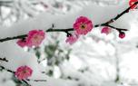 رکورد یخبندان شبانه در زاهدان