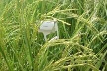 مبارزه با آفات محصولات زراعی در اردبیل آغاز شد