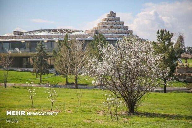 برپایی فرش گل در کاخ مروارید  بازدید بهصورت مجازی است