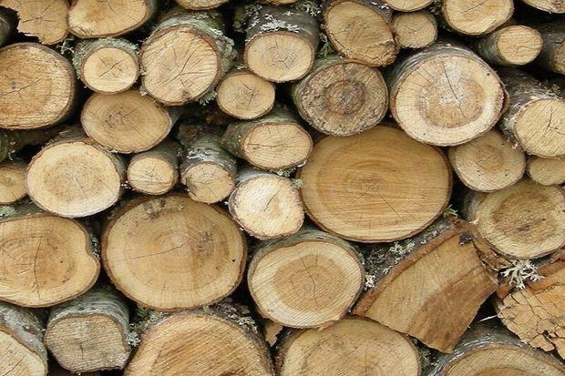 بیش از هزار اصله چوبآلات جنگلی در اردبیل کشف شد