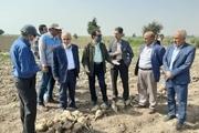خوزستان ظرفیت کشت ۶۰ هزار هکتار چغندرقند را دارد