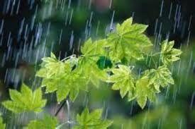 بارندگی ماههای شهریور و مهر در خراسان رضوی طبیعی خواهد بود