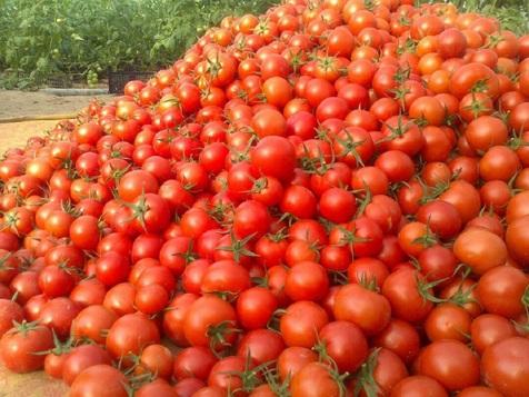 گوجه فرنگی 11 هزار تومانی به بازار آمد
