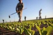 اختصاص 800 میلیارد ریال اعتبار برای مکانیزاسیون کشاورزی آذربایجانغربی
