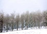 جنگل هیرکانی، گنجی محتاج مراقبت