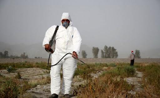 سمپاشی 110 هزار هکتار از مراتع سیستان و بلوچستان برای مبارزه با ملخ صحرایی
