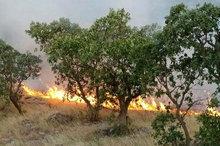 جدال داوطلبان و محیطبانان با آتش در «بوزین و مزه خیله» کرمانشاه