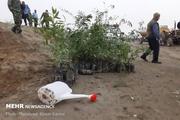 توزیع ۱۵۰ هزار اصله نهال جنگلی در هفته منابع طبیعی