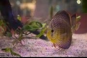 نمایشگاه شیلات، آبزیان و ماهیهای تزئینی در شیراز آغاز به کار کرد