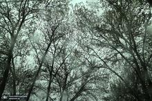 باران سیلآسا تهران -30 اردیبهشت 99