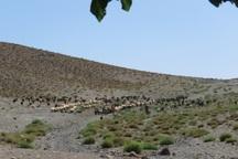 7000 خانوار عشایر خراسان جنوبی دغدغه آب دارند