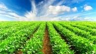 کرونا 384 میلیارد تومان به کشاورزی بوشهر خسارت وارد کرد