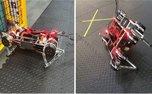 ربات ها به تنهایی راه رفتن می آموزند