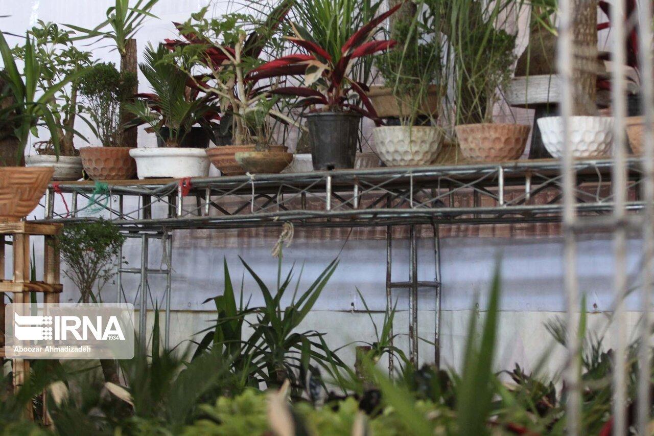 نمایشگاه گل و گیاهان دارویی در قزوین گشایش یافت