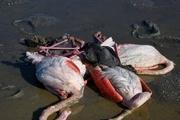 شکار در مازندران ممنوع شد
