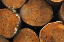 5 تن چوب جنگلی قاچاق در شهرستان لردگان کشف شد