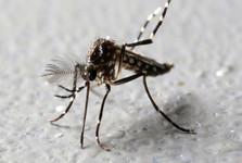 آیا حشرات ویروس کرونا را منتقل می کنند؟