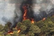تشکیل کمیته حقیقت یاب آتش سوزی در جنگل ها و مراتع گچساران
