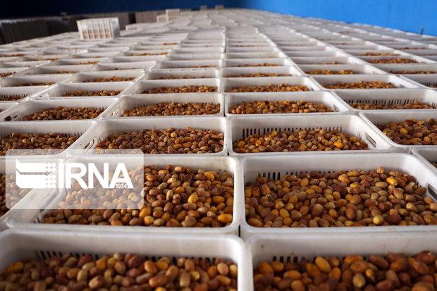 شناسایی بازار جهانی برای صادرات خرما ضروری است