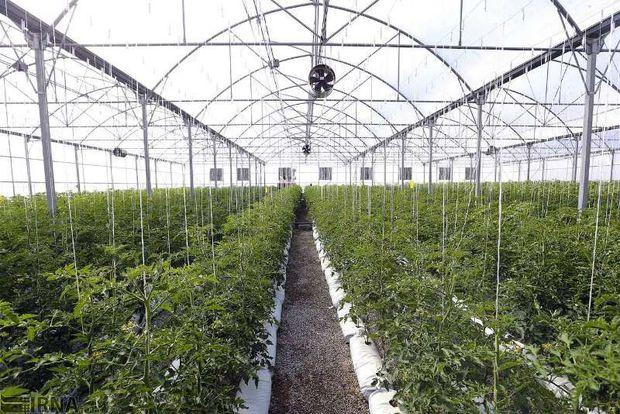 ۱۲۰ پروژه راکد کشاورزی در استان اردبیل فعال شد