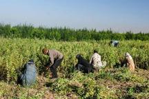 شغل برای روستاییان زنجان