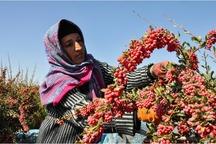 135میلیارد تومان تسهیلات اشتغال روستایی در زنجان پرداخت شد