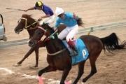 مسابقات اسبدوانی کورس پاییزه کشور در یزد آغاز شد