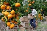 بخش کشاورزی و صنعت کرمان با وزارت خارجه ارتباط برقرار میکند