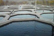 تجاری سازی تولید غذای زنده آبزیان در استخرهای خاکی آذربایجان غربی
