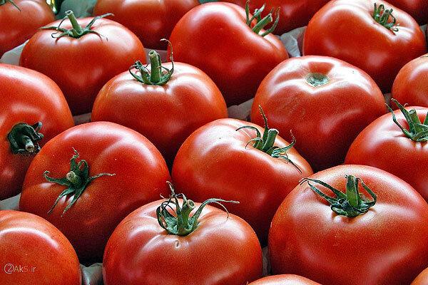 ورود چهار کارخانه خوزستان به خرید حمایتی گوجه فرنگی