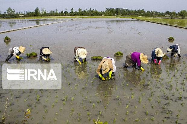 سرمایه ۵۰۰ میلیارد ریالی صندوق حمایت از توسعه کشاورزی گلستان