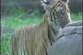 انتقال کرونا از انسان به حیوان