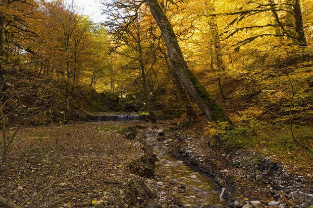 هدفگذاری 4500 هکتار زمین در مازندران برای زراعت چوب