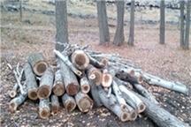 تاکید بر ضرورت تصویب شناسنامه باغات پایتخت تذکر به قطع درختان مجتمع پلیس