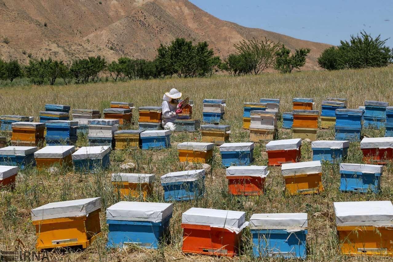 زنبورداران کوچرو آستارا برگ تردد میگیرند