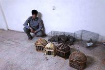 متخلف زنده گیری کبک در شهرستان دلفان دستگیر شد