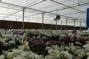 تولید و صادرات گل میتواند در زمان تحریم به اقتصاد کشور کمک کند