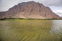 9 هزار و 500 هکتار اراضی کشاورزی سیل زده کرمانشاه بیمه است