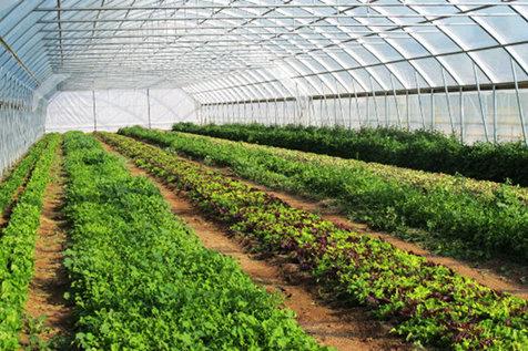 ساخت تجهیزات گلخانه ای هوشمند از سوی محققان جهاد دانشگاهی