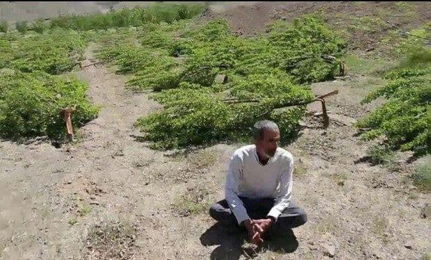 ماجرای نابودی ثمره تلاش یازده ساله باغدار روستایی