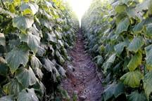 25 میلیارد ریال طرح کشاورزی در عنبرآباد افتتاح شد