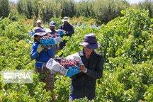 تسهیلات رونق تولید کشاورزی سمنان را از رکود خارج کرد