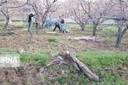 ۲ هزار هکتار از باغهای قزوین اصلاح و بهسازی میشود