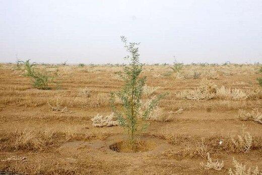 پروژه های بخش بیابان شاهرود 90 درصد پیشرفت فیزیکی دارد