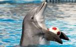 وضعیت دلفین و شیردریایی دلفیناریوم بعد از قطعی برق برج میلاد