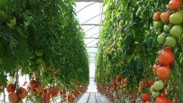 پنج طرح عمرانی و کشاورزی دردیرافتتاح و اجرایی شد