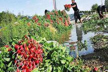 جهاد کشاورزی تکلیفی در مورد آبیاری مزارع با فاضلاب ندارد